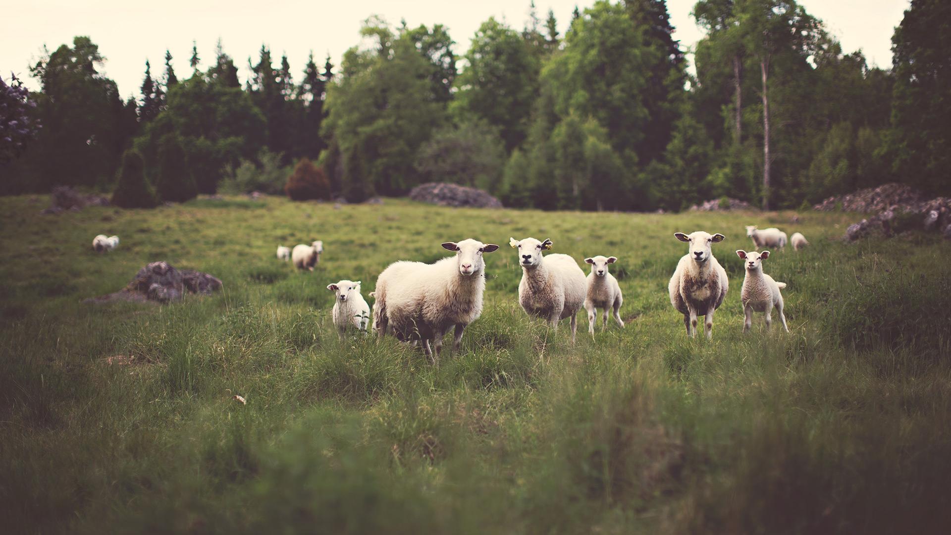 In A Farm